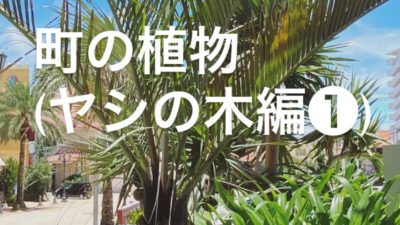 町の植物の話 ヤシの木編①